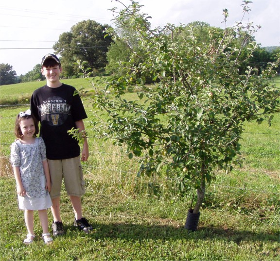 Apple tree that grows near their father s homeplace in the rickman
